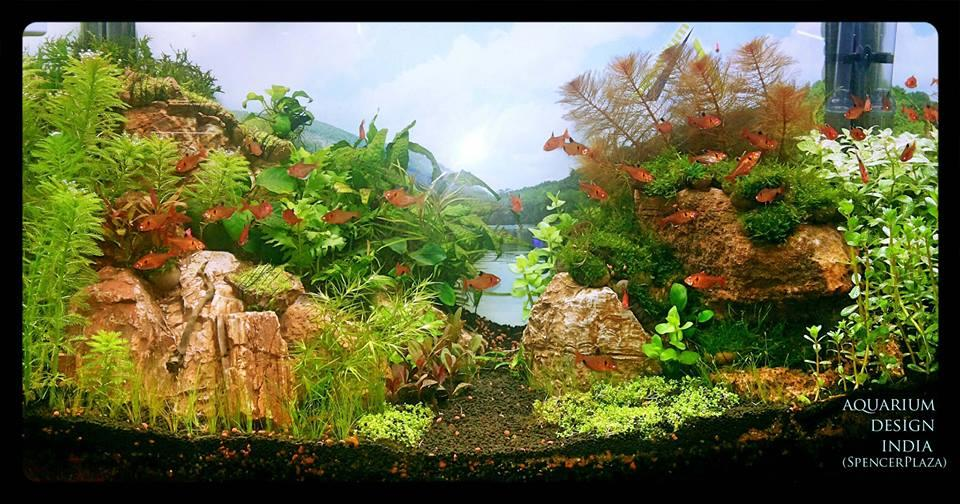 Aquarium design india for How to build an acrylic fish tank